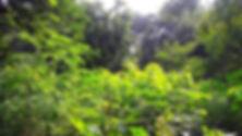IMG_9192_edited.jpg