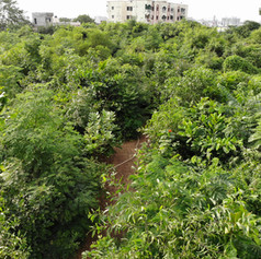 Cluster plantations
