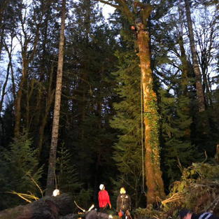 SORT Tree Rescue.jpg