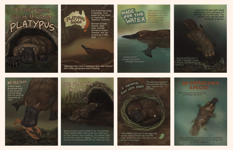 The Extraordinary Life of the Happily Lonely Platypus