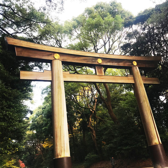 Torii at Meiji-Jingu