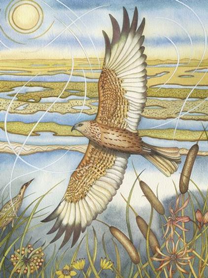 """""""Marsh Harrier"""" Card"""