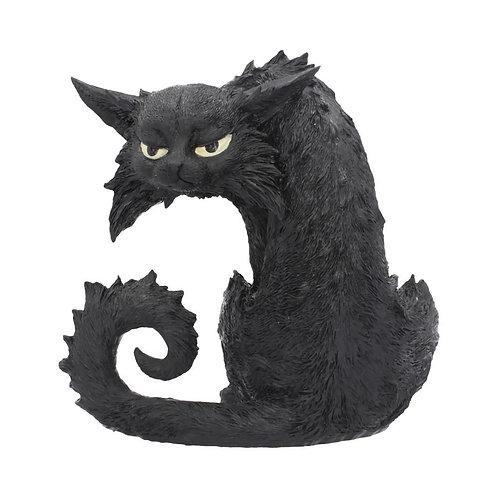 Spite the Cat