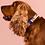 Thumbnail: Una Collar |Durable-Vegan | High QualityHardware