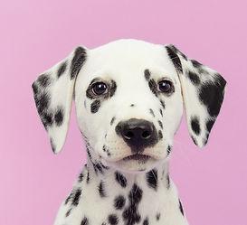 Dog's%2520Portrait%2520%2520%2520%2520_edited_edited.jpg