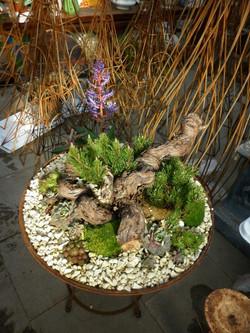 Kräuter, bepflanzte Steine, Rost