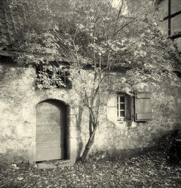 1954053.jpg