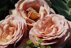 Rosen, Rosenraritäten