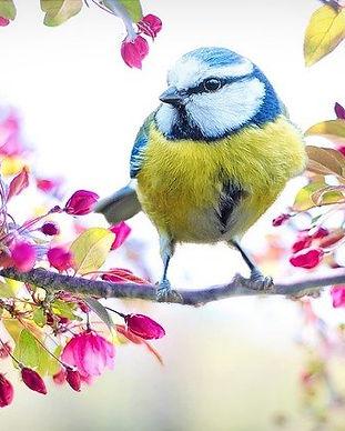 spring-bird-2295434_640.jpg