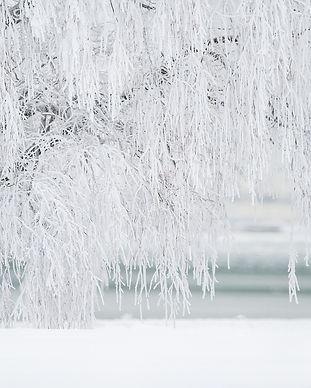 winter-1367153_1280.jpg