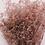 Thumbnail: Gypsophila