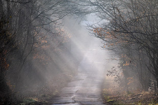 Road through the Mist