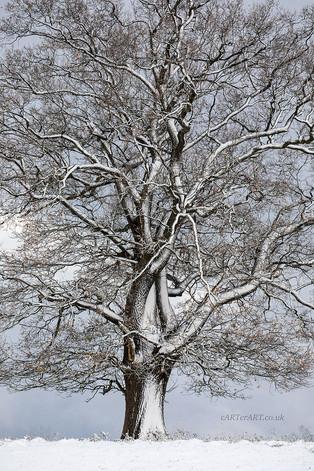 Clavers Tree