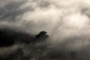 Lone Tree in Mists