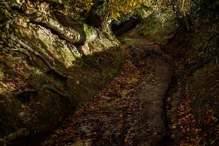 Sunken Road Shropshire