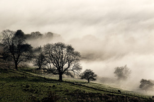 Teme Mists and Trees