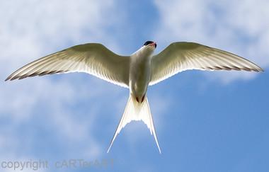 Arctic Tern Crucifix