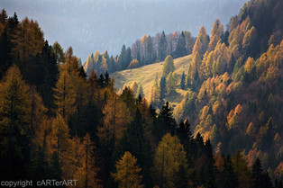 Layers of Trees