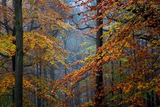 Wyre Autumn