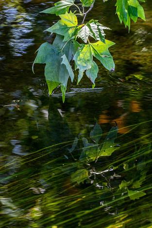 River Greens
