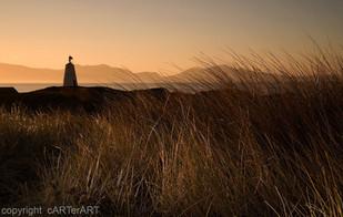 Llanddwyn Island Grasses