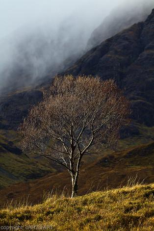 Scottish Mists