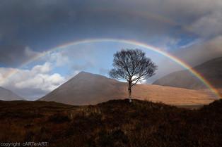 Rainbow Tree Slapin.jpg