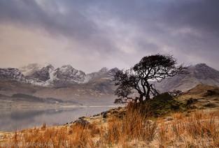Loch Slapin. Tree. Skye