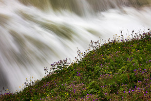 Flowers and Falls