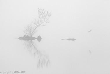 Llyn y Dywarchen Mist