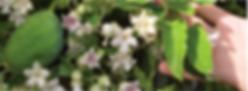 pfk-moth-plant.png