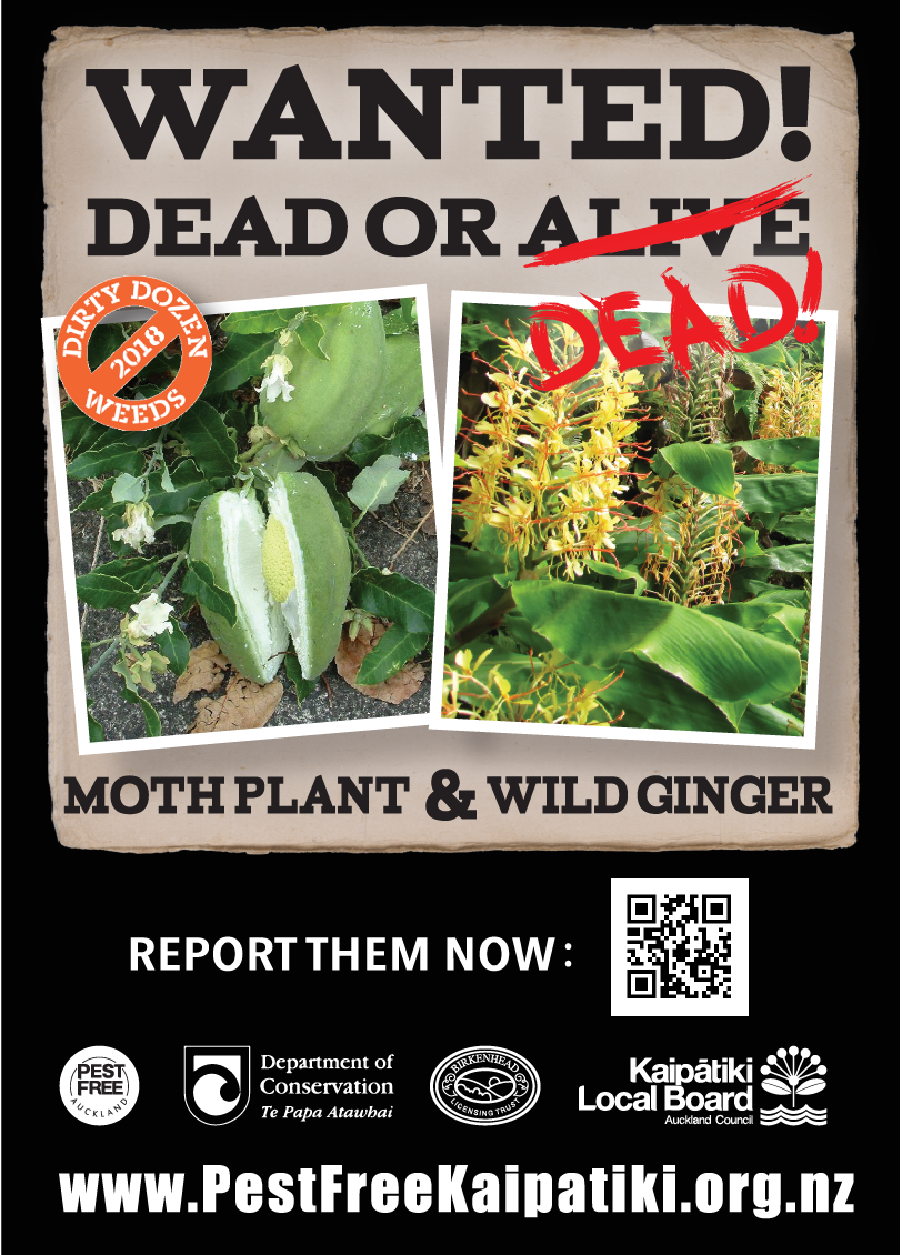 Wanted Moth Plant and Wild Ginger