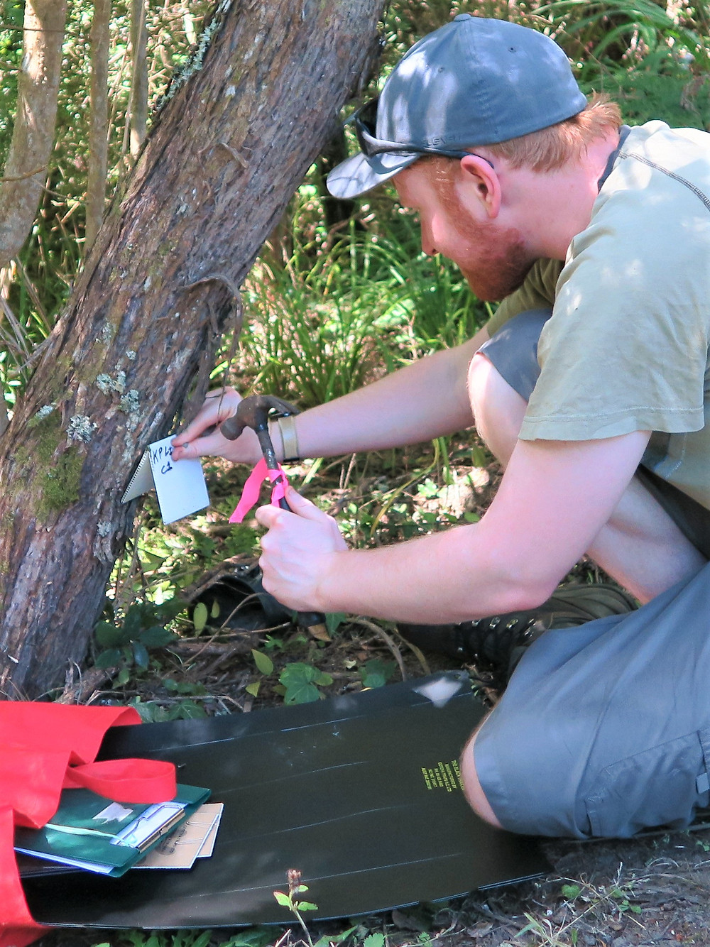 Ronan Whyte setting out chew cards earlier this year./ Kaipatiki Project