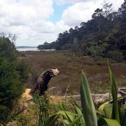 Kaipatiki offers a range of habitats