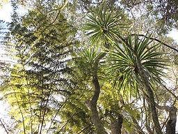 Linley Reserve