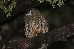 Help protect rare species habitats