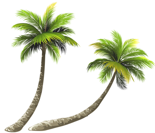 kisspng-arecaceae-coconut-royalty-free-i
