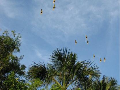 El Árbol de la Vida: La Palma de Moriche