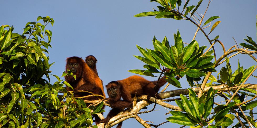 Observación de flora y fauna silvestre