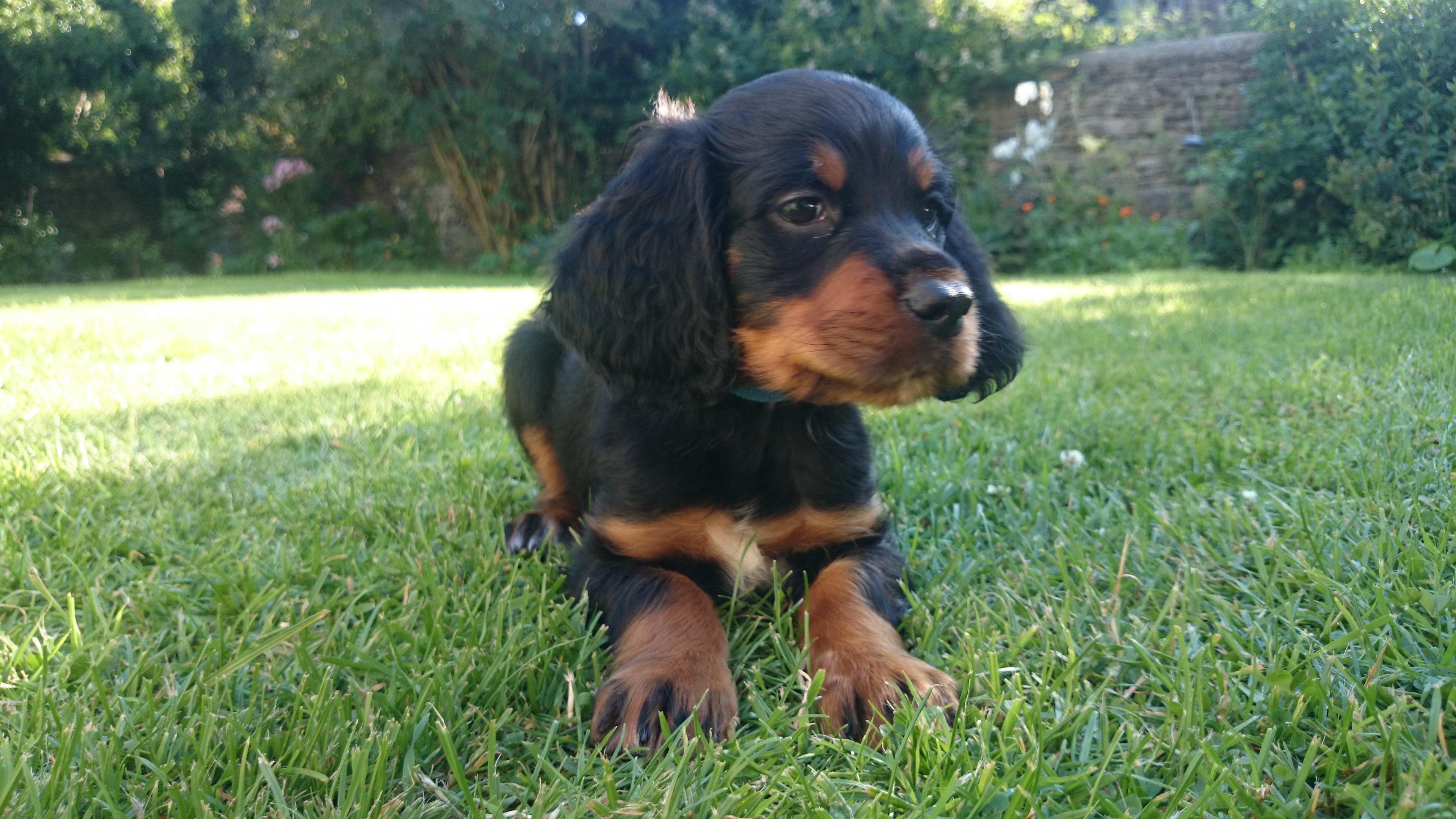 Monty at 12 Weeks