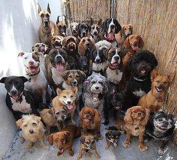 Tous les chiens_edited.jpg