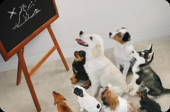 Les différentes méthodes d'éducation canine