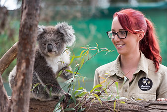 melbourne day tour package