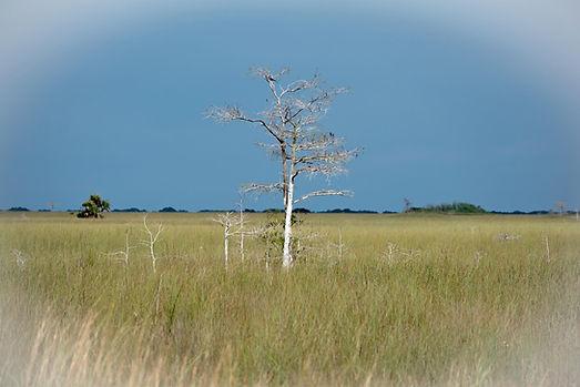 Marl Prairie