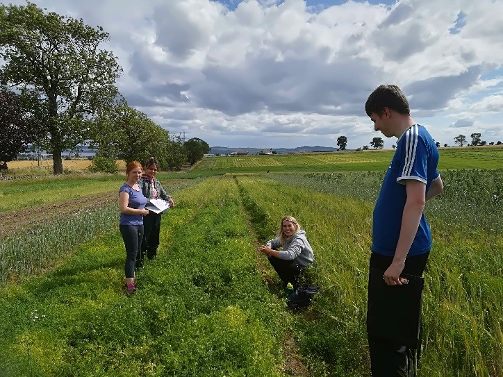 The field staff studying the lentil crop