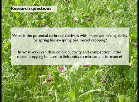 Breeding for crop mixtures: Opportunities and challenges