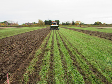 Managing mulches: the challenges of clover and climate