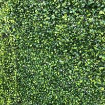 Hedge Wall