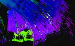 Butterfly Wing Purple