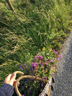 Blommor längs vägkanten.